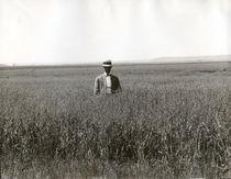 Mann im Haferfeld, South Dakota / Foto von AKG  Images