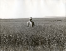 Mann im Haferfeld, South Dakota / Foto by AKG  Images