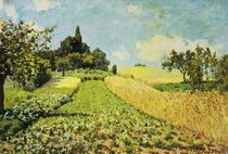 A.Sisley, Weizenfeld by AKG  Images