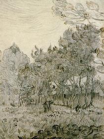 V.van Gogh, Im Park der Heilanstalt by AKG  Images