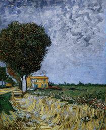 V.v.Gogh, Allee bei Arles von AKG  Images