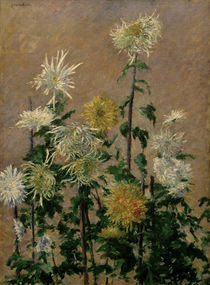 G.Caillebotte, Weiss.u.gelb.Chrysanthemen by AKG  Images