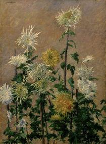 G.Caillebotte, Weiss.u.gelb.Chrysanthemen von AKG  Images