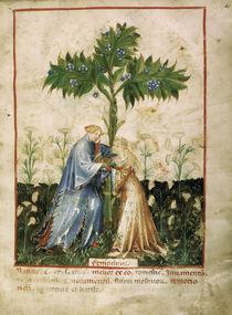 Fenchel / Aus 'Tacuinum Sanitatis' von AKG  Images