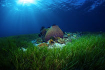 Magical-sea-grass-bed-2