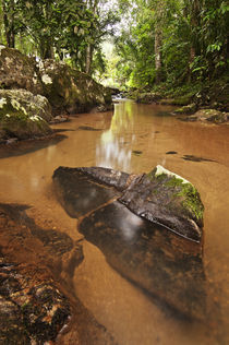 Rainforest Stream von Levy Carneiro Jr.