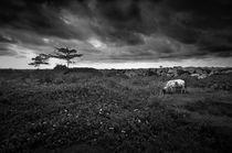 Cow & Cloud by Alex Soh