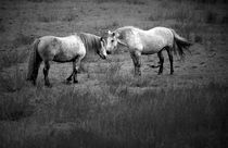 Horse-scotlandalexsoh-4441