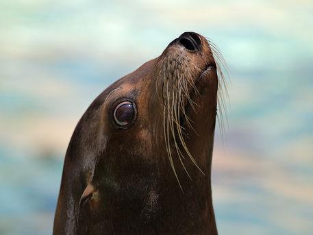 Seal-sw06-4180342