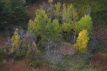 Ontario Landscape von Guenther Schwermer