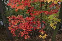 Ontario Colors von Guenther Schwermer