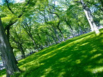 Springtime in Central Park II by ushkaphotography