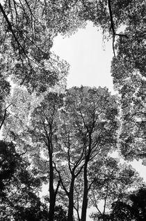 Treesalexsoh-alxbw6710