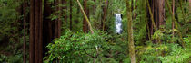 Berry Creek Falls and Redwood Forest