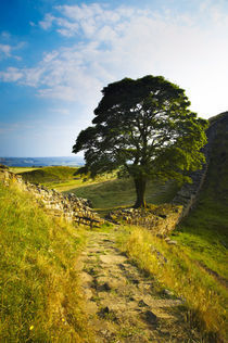 England, Northumberland, Northumberland National Park by Jason Friend