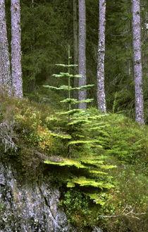 Schottland, Schottische Highlands, Cairngorm National Park von Jason Friend
