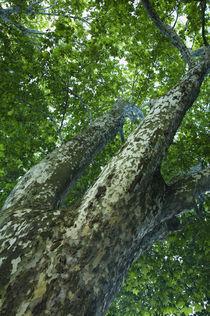 Frankreich, Rhône-Alpes, Annecy Tree von Jason Friend