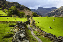 England, Cumbria, Lake District National Park by Jason Friend