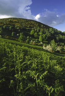 Scotland, Scottish Borders, Eildon Hills. by Jason Friend