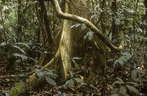Malaysia, Pahang, Taman Negara National Park by Jason Friend