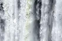 Argentina, Misiones, Iguazu National Park by Jason Friend