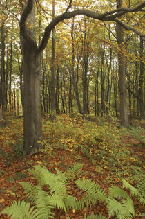 England, Tyne and Wear, Chopwell Woodland Park von Jason Friend