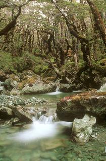 New Zealand, Otago, Wakatipu Forest by Jason Friend
