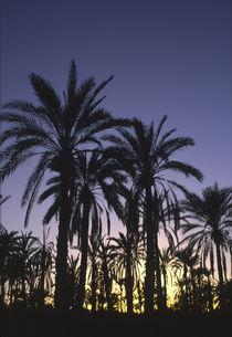 Tunesien, Jerid, Nefta von Jason Friend