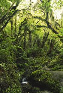 New Zealand, Westcoast, Westland National Park by Jason Friend