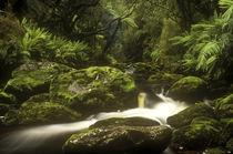 Neuseeland, Stewart Island, Rakiura Nationalpark von Jason Friend