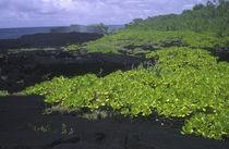 Independent Samoa, Upolu, O Le Pupu-pe'e Nationalpark von Jason Friend