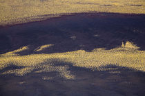 Argentinien, Mendoza, Parque Provincial Payunia. von Jason Friend