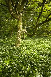 England, Northumberland, Plessey Woods Country Park / Blagdon Estate. von Jason Friend