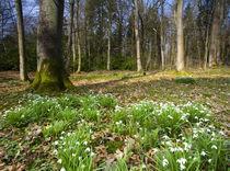 England, Northumberland, Wallington Hall &Amp; Gardens. by Jason Friend