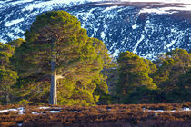 Schottland, Aberdeenshire, Mar Lodge Estate. von Jason Friend