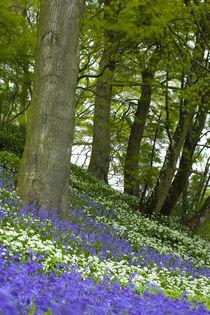 England, Northumberland, Allen Banks. by Jason Friend