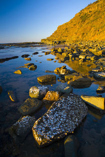 Australien, New South Wales, Royal National Park. von Jason Friend