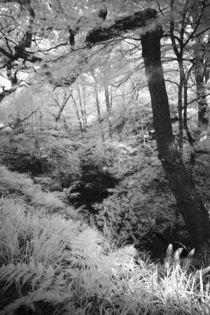 England, Northumberland, Plessey Woods Country Park. von Jason Friend