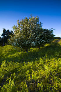 England, Northumberland, Kyloe Hills. by Jason Friend