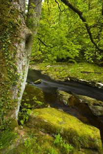 England, Yorkshire, Yorkshire Dales Nationalpark. von Jason Friend
