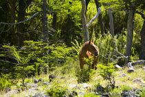 Argentinien, Der Lake District, Parque Nacional Lanin. von Jason Friend