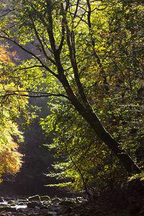 England, Northumberland, Allen Banken & Staward Gorge von Jason Friend