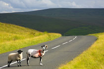 England, Northumberland, North Pennines. by Jason Friend