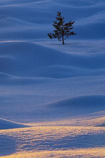 Schottland, Schottische Highlands, Abernethy. von Jason Friend