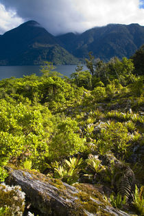 New Zealand, Southland, Fiordland National Park. by Jason Friend
