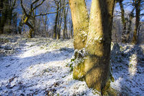 England, Northumberland, Plessey Woods Country Park. by Jason Friend