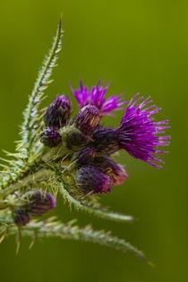 Schottland, Schottische Highlands, Cairngorms Nationalpark. von Jason Friend