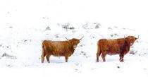 Scotland, Scottish Highlands, Glen Dochart. by Jason Friend