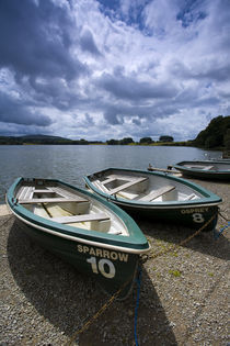 England, Cumbria, Talkin Tarn Country Park. von Jason Friend