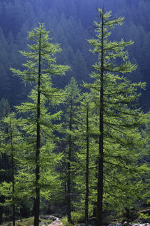 Italy, Valle D'Aosta, Gran Paradiso National Park by Jason Friend